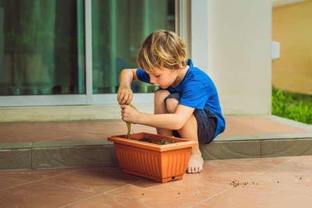 Little cute boy sows seeds in a flower pot in the garden