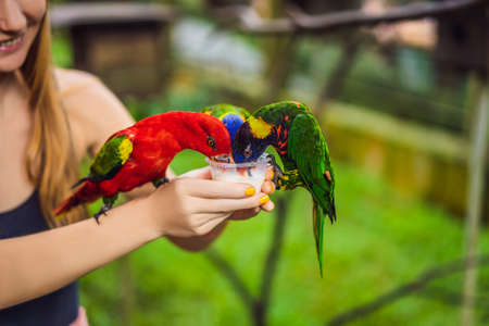 Young woman feeding big tropical parrots with milk 免版税图像