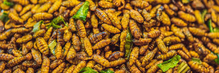 Fried insects, Bugs fried on Street food in thailand BANNER, LONG FORMAT