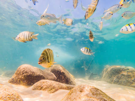 Many fish, anemones and sea creatures, plants and corals under water near the seabed with sand and stones in blue and purple colors seascapes, views, sea life. Stock fotó