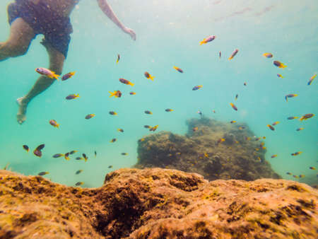 Young men snorkeling exploring underwater coral reef landscape  in the deep blue ocean with colorful fish and marine life.