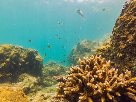 Muchos peces, anémonas y criaturas marinas, plantas y corales bajo el agua cerca del fondo marino con arena y piedras en colores azul y violeta, paisajes marinos, vistas, vida marina.