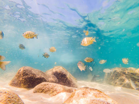 Many fish, anemones and sea creatures, plants and corals under water near the seabed with sand and stones in blue and purple colors seascapes, views, sea life. 版權商用圖片