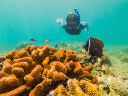 Young men snorkeling exploring underwater coral reef landscape   in the deep blue ocean with colorful fish and marine life