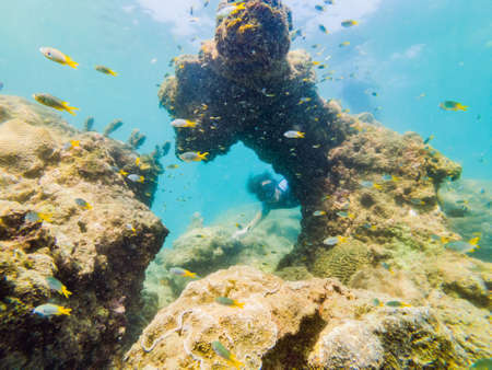 Young men snorkeling exploring underwater coral reef landscape  in the deep blue ocean with colorful fish and marine life 版權商用圖片