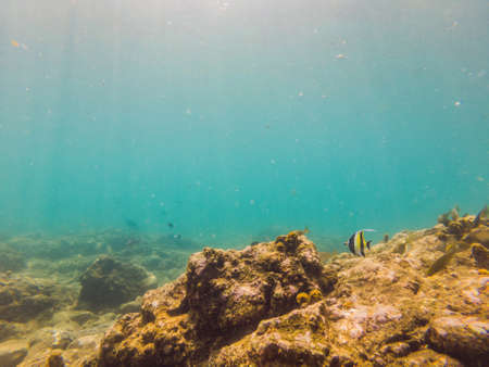 Many fish, anemones and sea creatures, plants and corals under water near the seabed with sand and stones in blue and purple colors seascapes, views, sea life