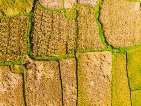 Photo from drone, rice harvesting by local farmers 스톡 콘텐츠