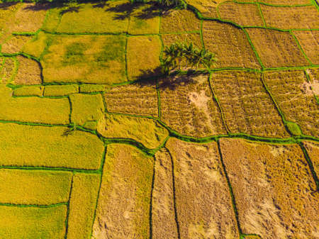 Photo from drone, rice harvesting by local farmers 스톡 콘텐츠 - 122691119
