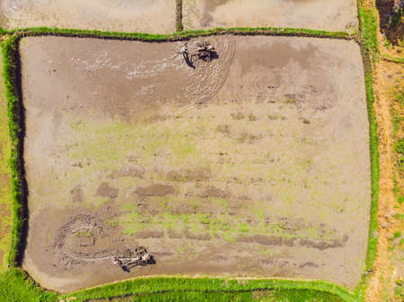 tractor on the rice field. view from the drone Banco de Imagens
