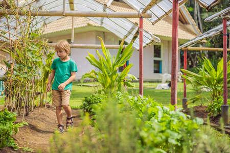 Little cute boy in organic bio vegetable garden 写真素材