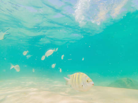 Beautiful tropical fish on the white sand beach