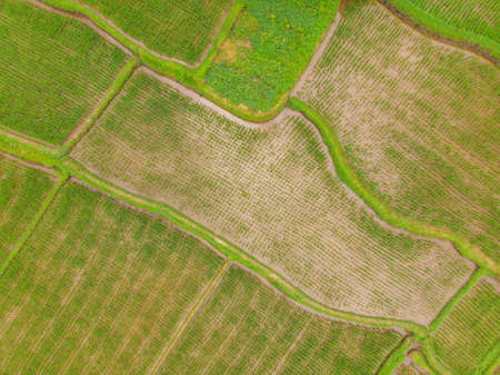 Image of beautiful Terraced rice field in water season and Irrigation Stockfoto