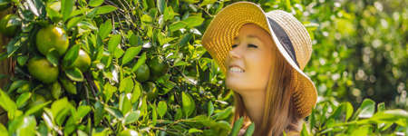 BANNER, LONG FORMAT Portrait of Attractive Farmer Woman is Harvesting Orange in Organic Farm, Cheerful Girl in Happiness Emotion While Reaping Oranges in The Garden, Agriculture and Plantation Concept