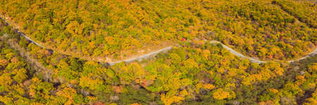 Aerial view of road in beautiful autumn forest at sunset.