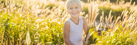 Beautiful happy smiling little boy among the cornfields touching plants with his hands BANNER, LONG FORMAT Фото со стока