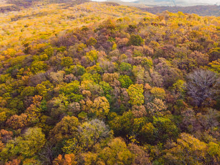 Aerial top down view of autumn forest with green and yellow trees. Mixed deciduous and coniferous forest. Beautiful fall scenery Banco de Imagens