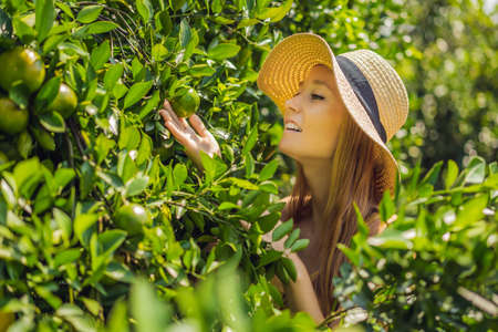 Portrait of Attractive Farmer Woman is Harvesting Orange in Organic Farm, Cheerful Girl in Happiness Emotion While Reaping Oranges in The Garden, Agriculture and Plantation Concept