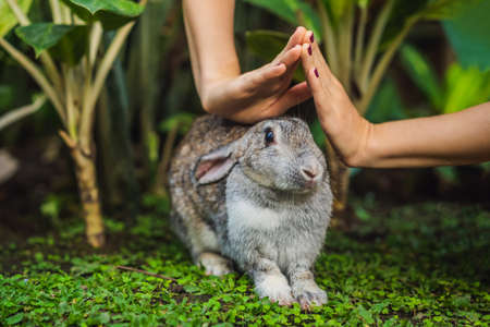 Hands protect rabbit. Cosmetics test on rabbit animal. Cruelty free and stop animal abuse concept Reklamní fotografie