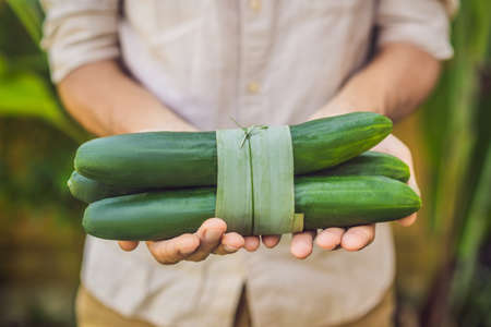 Eco-friendly product packaging concept. Cucumber wrapped in a banana leaf, as an alternative to a plastic bag. Zero waste concept. Alternative packaging Imagens