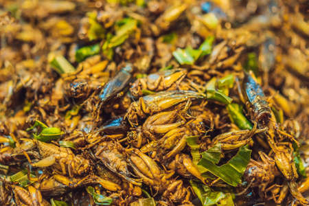 Fried insects, in the walking street market, Phuket Thailand