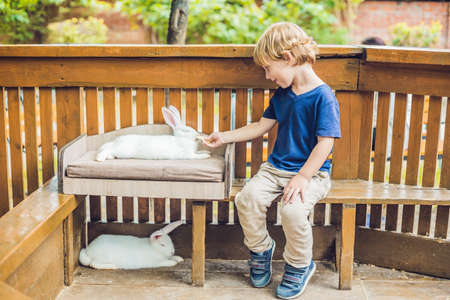 Toddler boy caresses and playing with rabbit in the petting zoo.