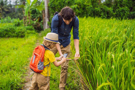Dad and son identify plants using the application on a smartphone. augmented reality.
