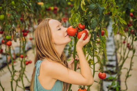 Close up of woman holding tomatoes on branch next to her face, thinking of eating it Stockfoto