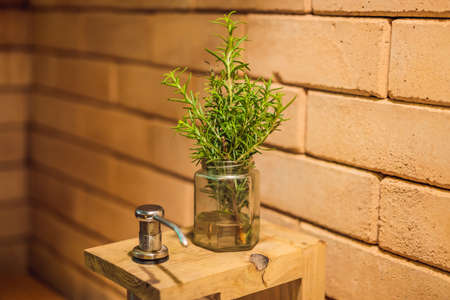 Fresh organic Rosemary Herb in a pot