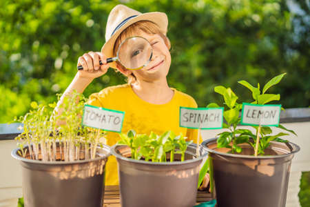 The boy studies the plants through a magnifying glass. He is doing gardening on his balcony. Natural development for children Stok Fotoğraf