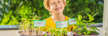 The boy is doing gardening on his balcony. Natural development for children BANNER, LONG FORMAT