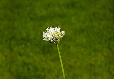 Wild flower, grass close up on a blurred background.