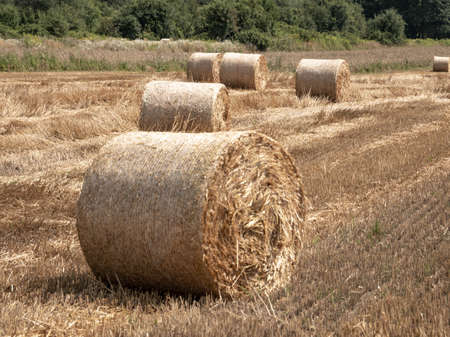 Bales of hay in the meadow, Haystacks on the field, Twisted haystack on agriculture field landscape, Round dried haystacks in the field Stock fotó