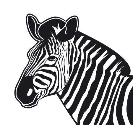 vector illustration of a zebra Stock Vector - 3128469
