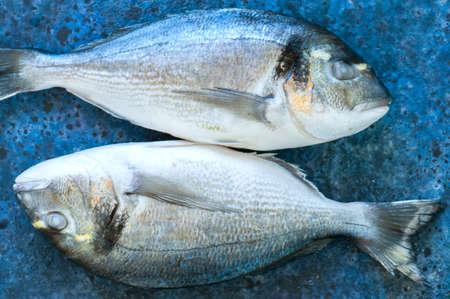 the dorada: Fresh two raw dorado fish on a blue stone background. Selective focus. Overhead view. Stock Photo