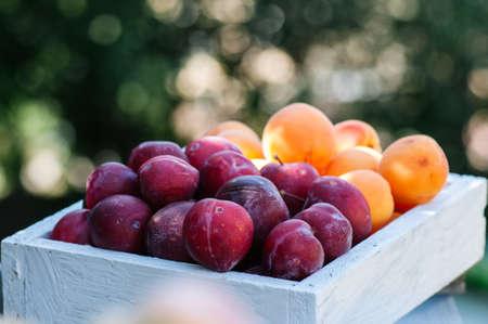 Ciruelas maduras frescas y albaricoques en caja de madera. Jardín de verano en un día soleado.