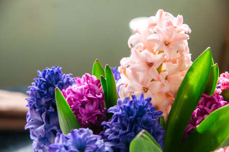 Bouquet of hyacinth flowers. Life style concept.