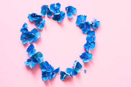 Beautiful blue hydrangea petals on pink background. Top view.