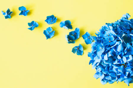 Beautiful blue hydrangea petals on yellow background. Top view.