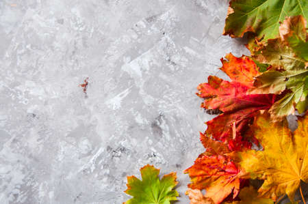 Colorful maple leaves on a gray concrete background
