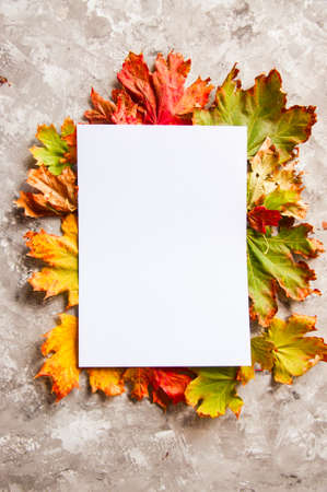 Empty white paper on a colorful maple leaves on a gray background.