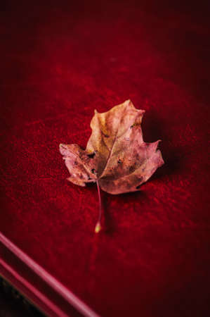 One red autumn maple leaf on a book 写真素材