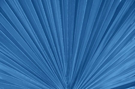 Close up of palm leaf. Toned in blue color of the year 2020. Banco de Imagens