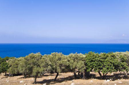 olivo arbol: Jard�n de �rbol de olivo en el fondo del mar  Foto de archivo