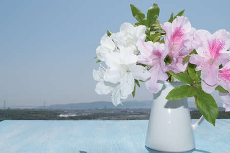 china rose: Hibiscus bouquet on wooden table background of blue sky  Rose Mallow, Shoe Flower, Roselle, China Rose Stock Photo