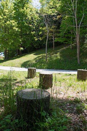 stumped: Stump of a cut tree on green grass field in park