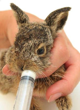 Kid hare feeding syringe