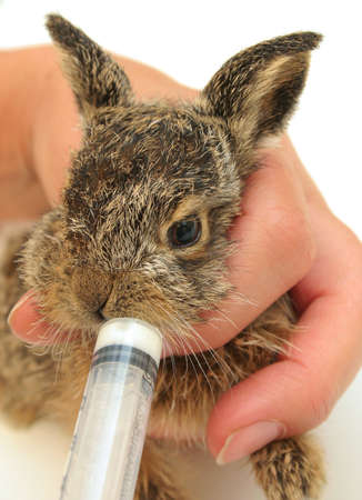 Kid hare feeding syringe