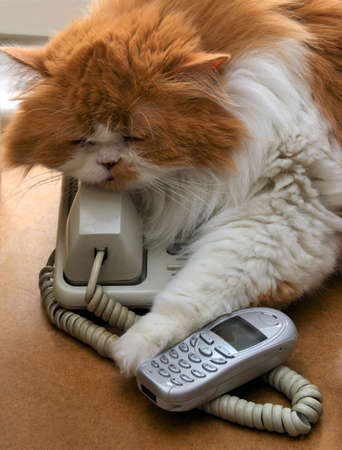 the Persian cat is asleep, and kept the phone
