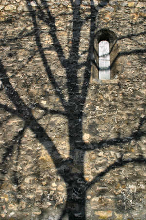 The bare trees upon the castle wall the shadow of the side