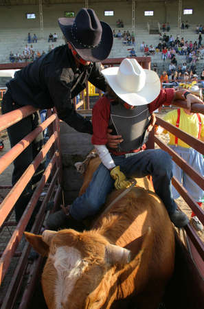Rodeo bull before the start time.